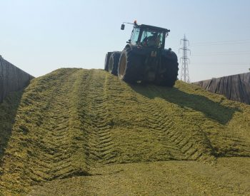 Agriserv servizi agricoli conto terzi trinciatura mais