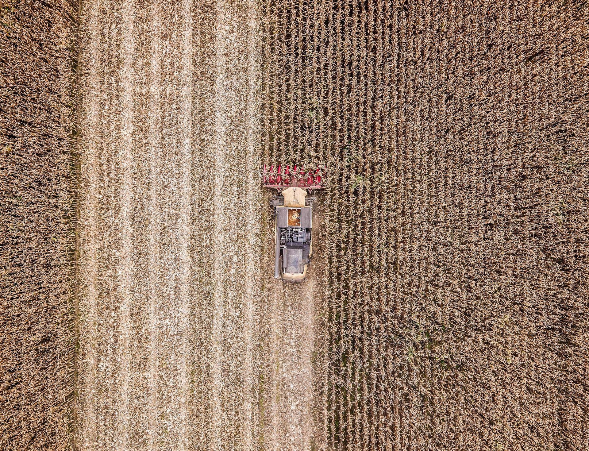 Commercio e vendita di cereali all'ingrosso
